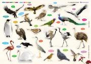 Cùng con chơi và học - Birds - Các loài chim