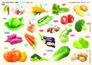 Cùng con chơi và học - Vegetables - Rau củ quả